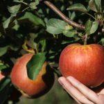 Os sete pecados mortais: quando satanás revela seus métodos de tentação